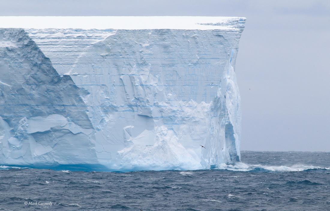 MC001143 Iceberg