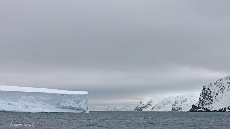 MC__1125 (1) Iceberg Elephant