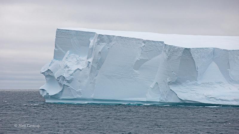 MC__1159 (1) Elephant Iceberg