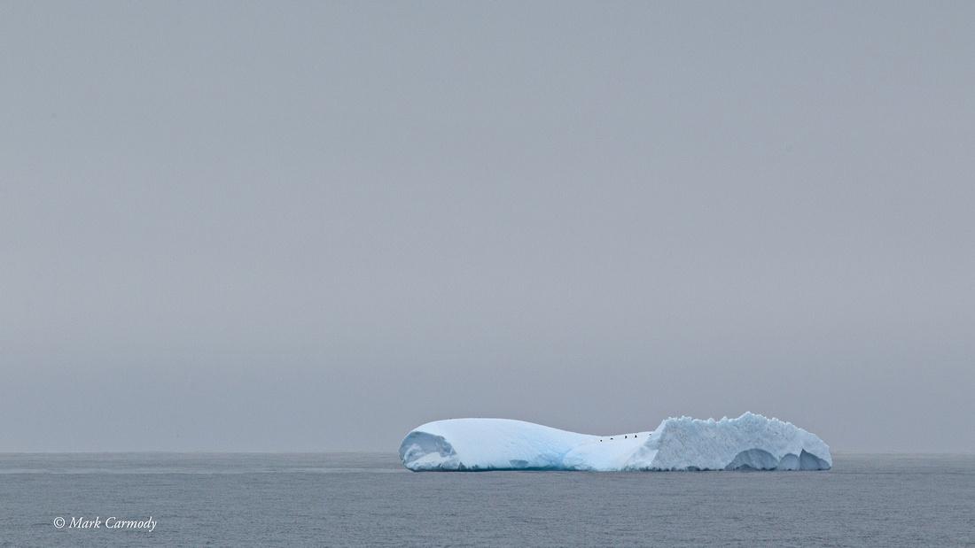 MC003199 (1) Chinstrap Iceberg