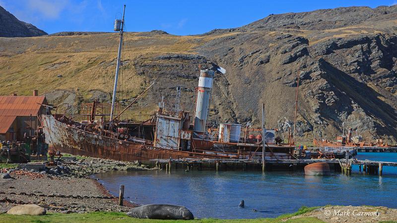 Whaler Grytvikan
