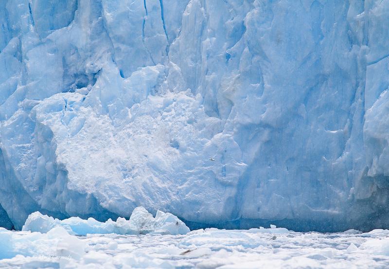 MC001388 Snow Petrel glacier